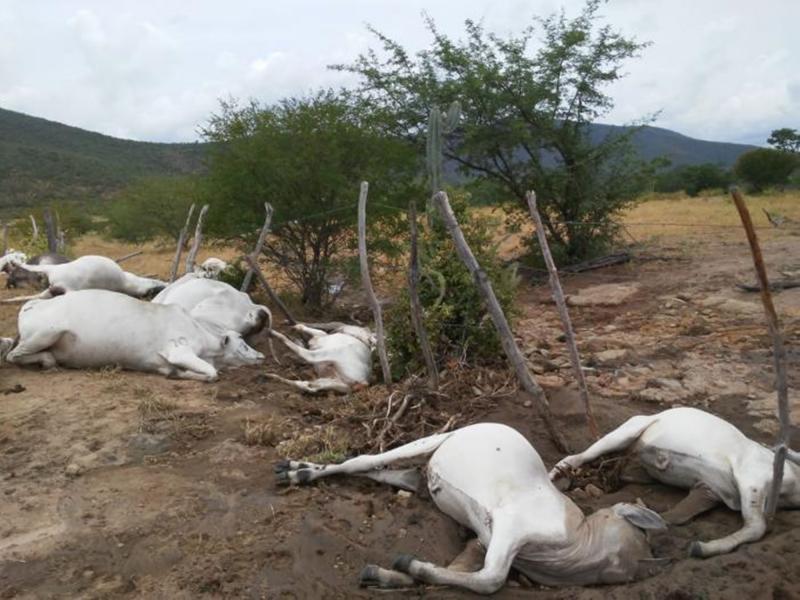 Raio atinge fazenda e mata 23 animais em Jequié